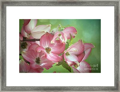 Eastern Dogwood II Framed Print