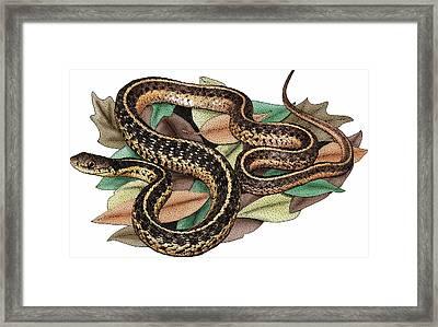 Eastern Garter Snake Framed Print