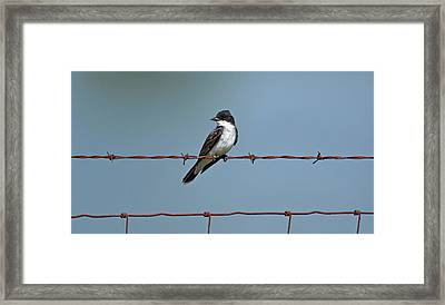 Eastern Kingbird On Wire Framed Print by Sandy Keeton