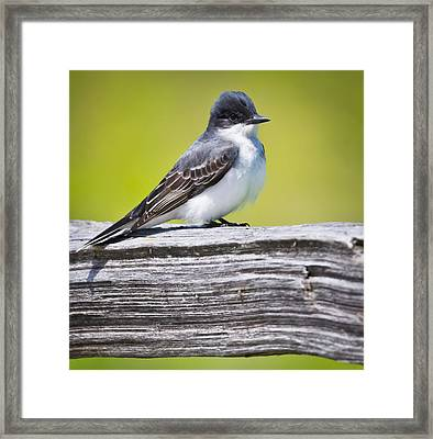 Eastern Kingbird Framed Print by Ricky L Jones
