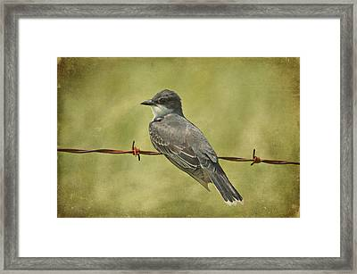Eastern Kingbird Framed Print by Sandy Keeton
