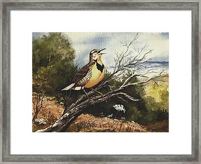 Eastern Meadowlark Framed Print