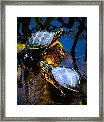 Eastern Painted Turtles Framed Print