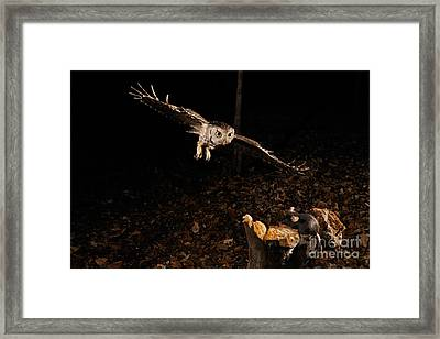 Eastern Screech Owl Hunting Framed Print by Scott Linstead