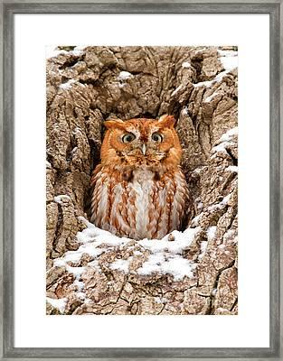Eastern Screech Owl Framed Print by Joshua Clark