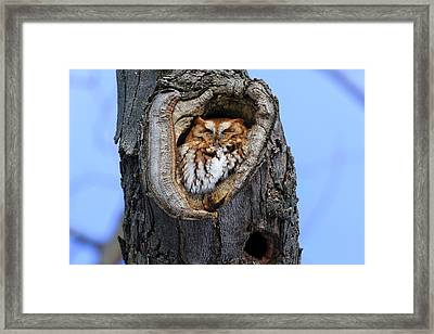 Eastern Screech Owl - Red Morph Framed Print by Gary Hall