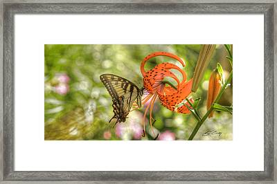 Eastern Tiger Swallowtail - Papilio Glaucus - Butterfly On Tiger Lily Framed Print
