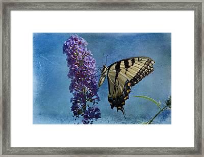 Eastern Tiger Swallowtail Butterfly 2 Framed Print by Sandy Keeton