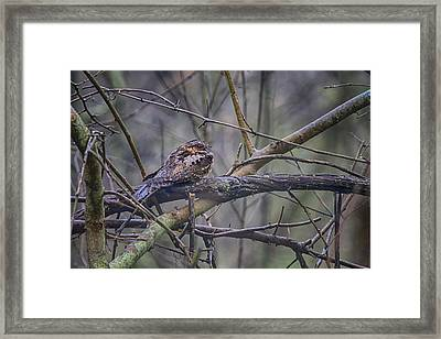 Eastern Whip-poor-will Framed Print by Gary Hall