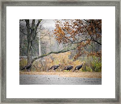Eastern Wild Turkey  Framed Print