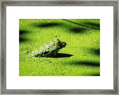 Easy Being Green Framed Print by Rebecca Sherman