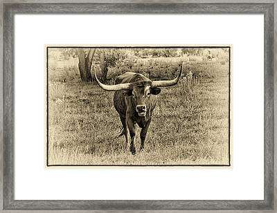 Eat Leaf Not Beef Sepia Framed Print by Priscilla Burgers