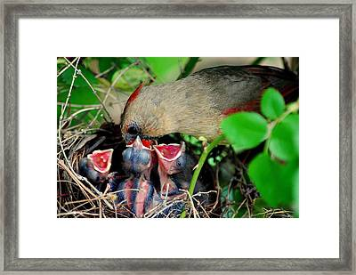 Eat Up Framed Print by Frozen in Time Fine Art Photography