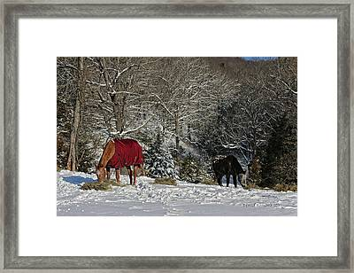 Eating Hay In The Snow Framed Print by Denise Romano