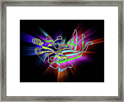 Ebola Matrix Protein Molecule Framed Print by Laguna Design