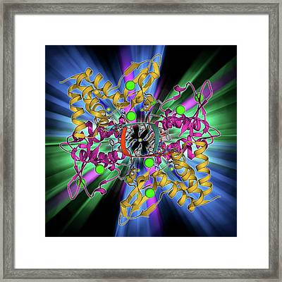 Ebola Viral Protein 35 And Rna Framed Print by Laguna Design