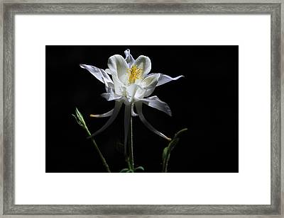 Ebony And Ivory Framed Print by Donna Kennedy