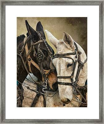 Ebony And Ivory Framed Print by Ron  McGinnis