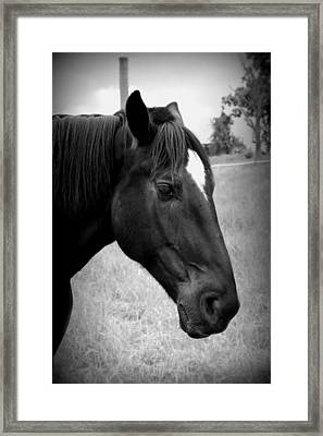 Framed Print featuring the photograph Ebony Beauty by Laurie Perry