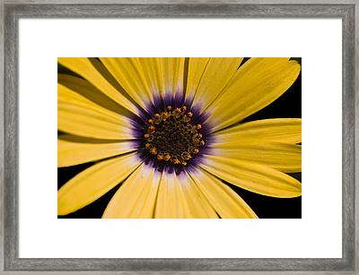Ebullient Framed Print by Cara Moulds