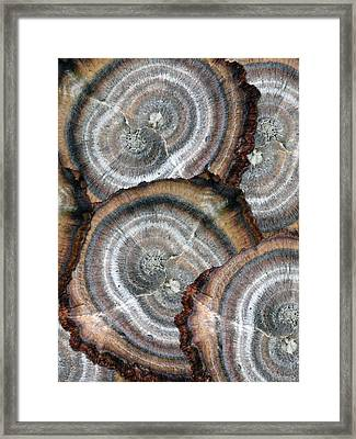 Eccentrically Concentric Framed Print by Sue Duda