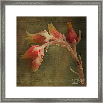 Echervia Blossom Framed Print by Pam Vick