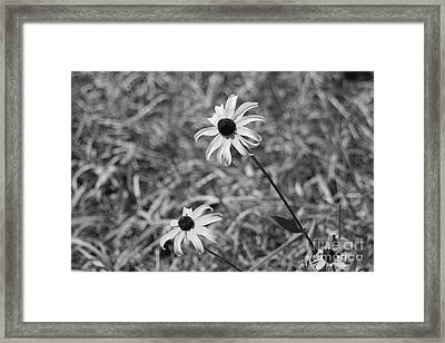 Echinacea Framed Print by Barbara Bardzik
