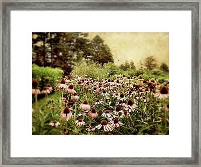Echinacea Garden Framed Print by Jessica Jenney