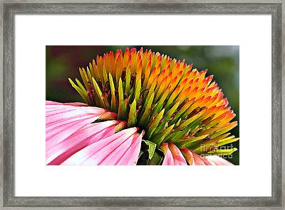Echinacea In  Watercolors  Framed Print by Chris Berry