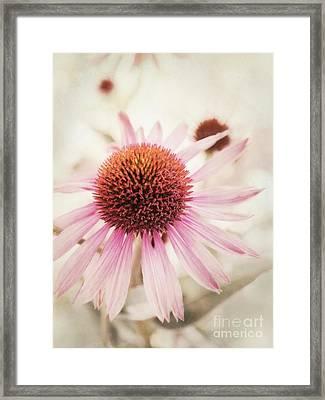Echinacea Framed Print by Priska Wettstein