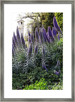Echium And Tower Framed Print