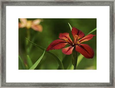 Framed Print featuring the photograph Echo - Copper Iris Art Print by Jane Eleanor Nicholas