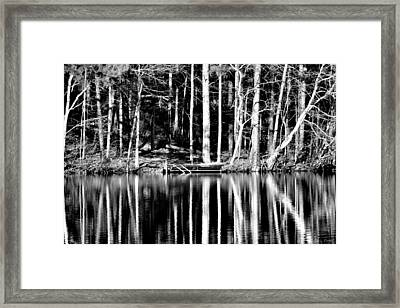 Echoing Trees Framed Print