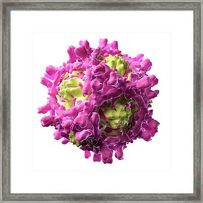Echovirus Particle, Artwork Framed Print by Sciepro