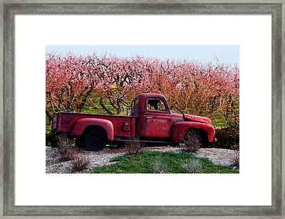 Eckert Orchards Belleville Framed Print