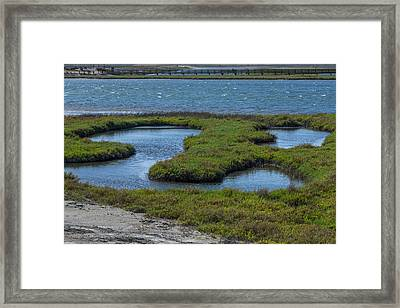 Eco System Framed Print by Ernie Echols