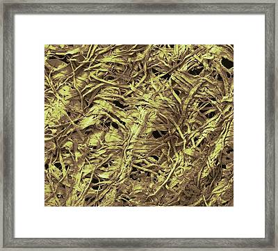 Eco Tissue Framed Print by Steve Gschmeissner