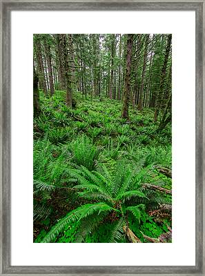 Ecola Ferns Framed Print