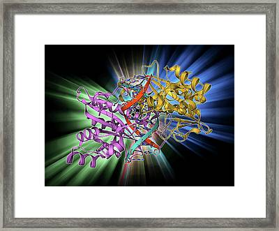Ecorv Restriction Enzyme Molecule Framed Print