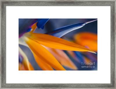 Ecstatic Motion Framed Print by Sharon Mau