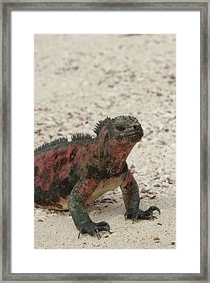 Ecuador, Galapagos, Espanola, Punta Framed Print
