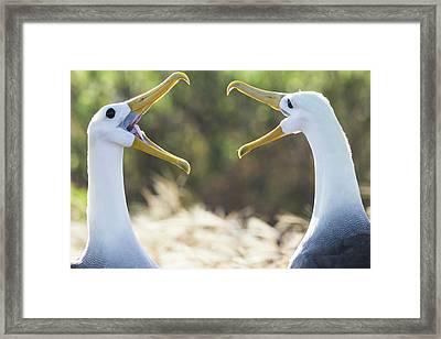 Ecuador, Galapagos Islands, Espanola Framed Print