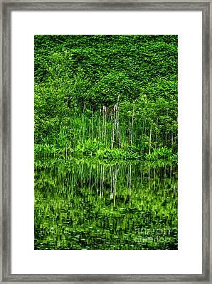Eden 38 Oil Framed Print