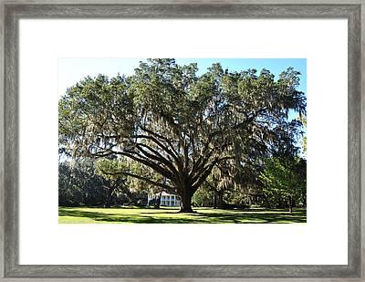 Eden Gardens State Park 1 Framed Print by Michele Kaiser