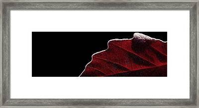 Edge Of Autumn Framed Print by Steven Milner