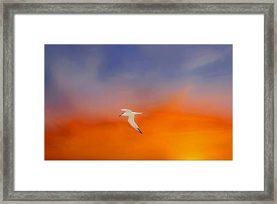 Edge Of Sunset Framed Print by Barbara Chichester
