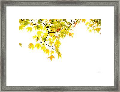 Edge Of The Season Framed Print