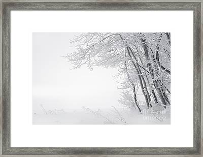 Edge Of Winter Framed Print by Dan Jurak