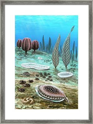 Ediacara White Sea Assemblages Framed Print by Richard Bizley