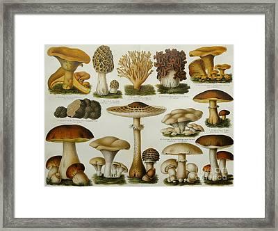 Edible Mushrooms Framed Print